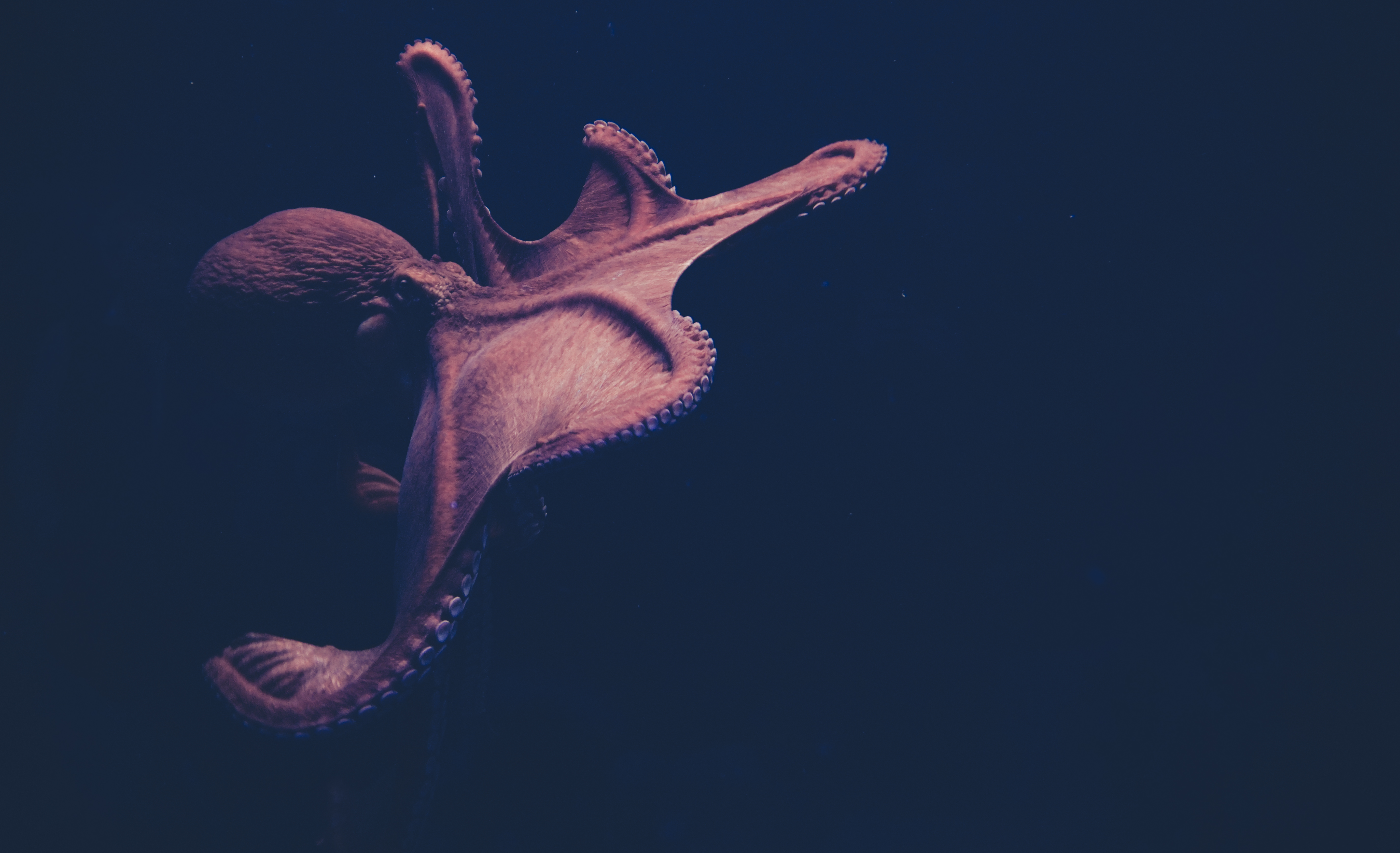 100+ Octopus Pictures [HD]