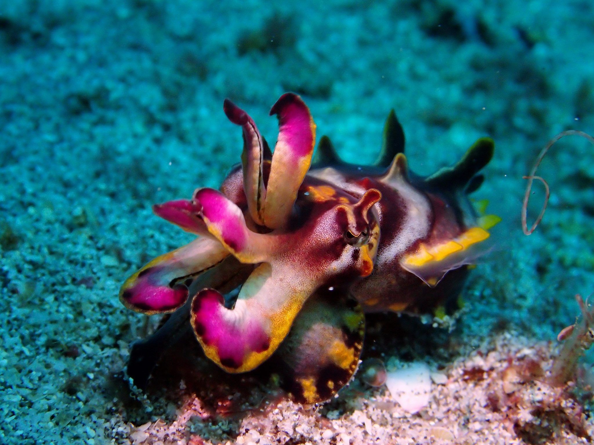 Fun Facts About Cuttlefish