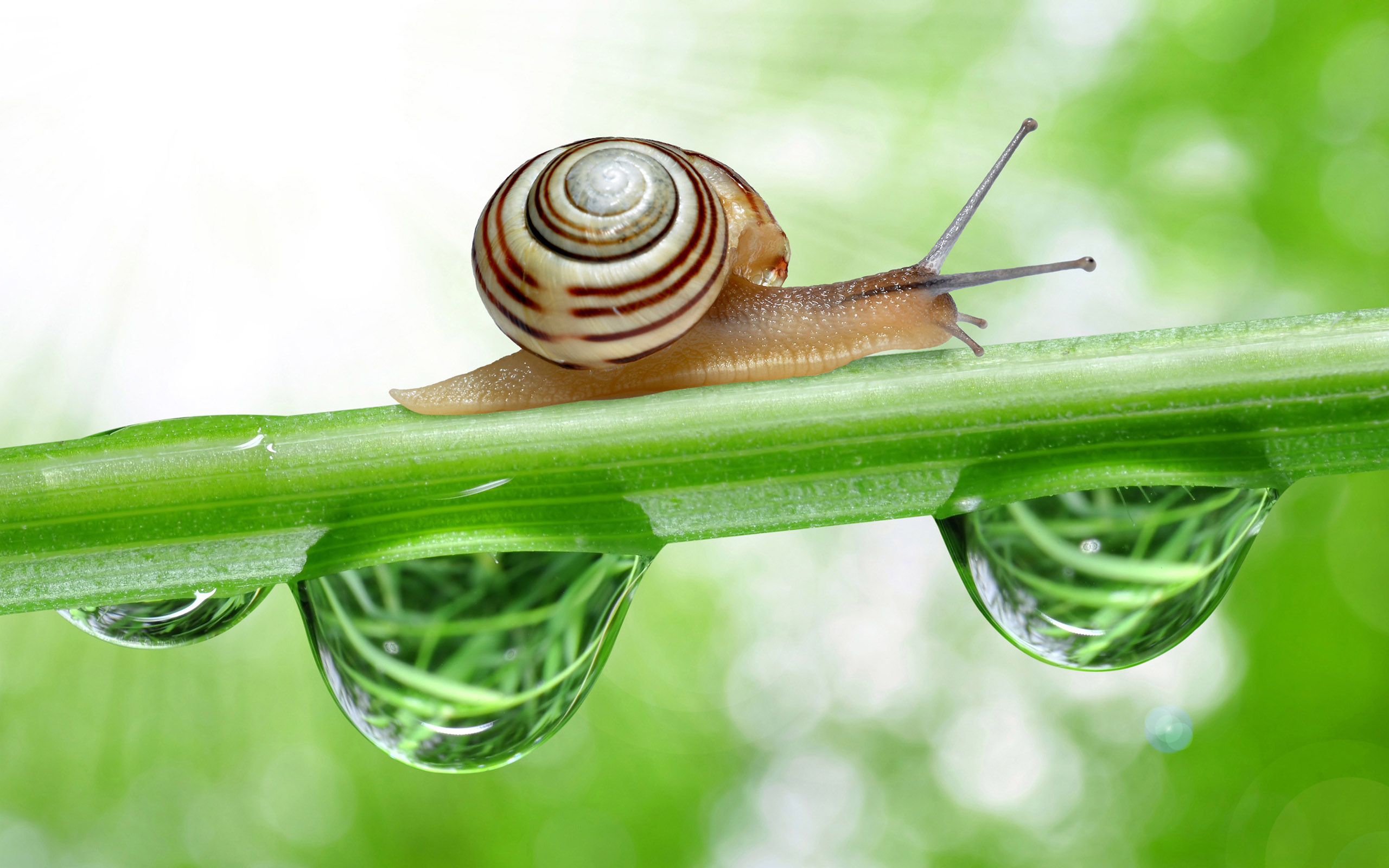 15 Ways to Get Rid of Snails & Slugs from Your Garden – Jinn