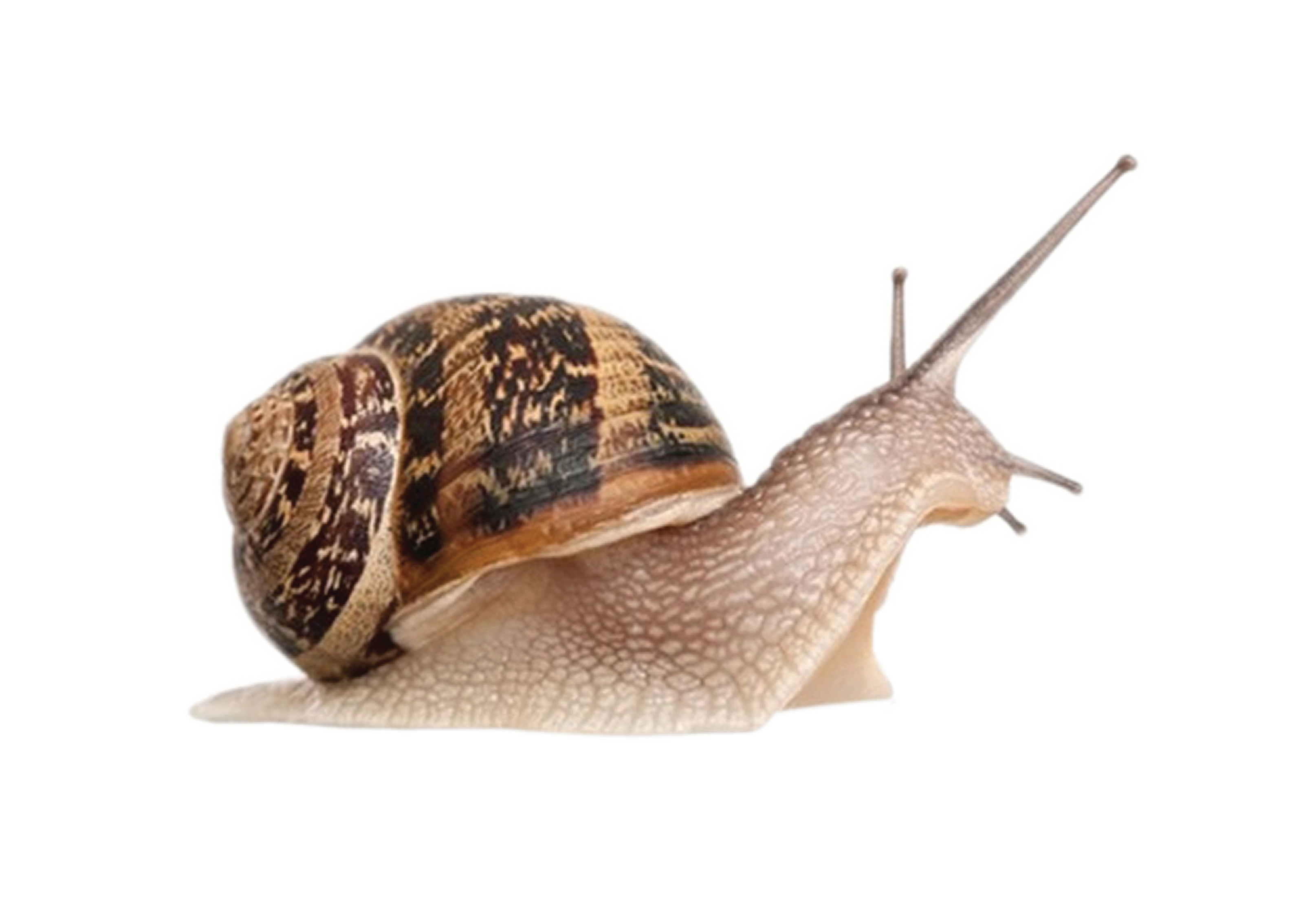 Most viewed Snail wallpapers