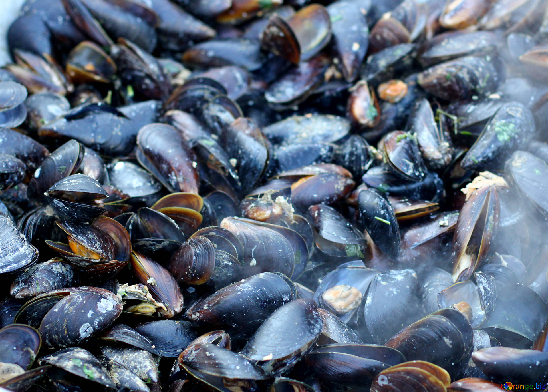 Seafood mussels fried trade № 47512