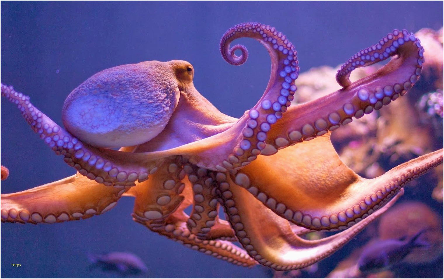 Octopus Wallpapers Unique Octopus • Meh – The Best Wallpapers Collection