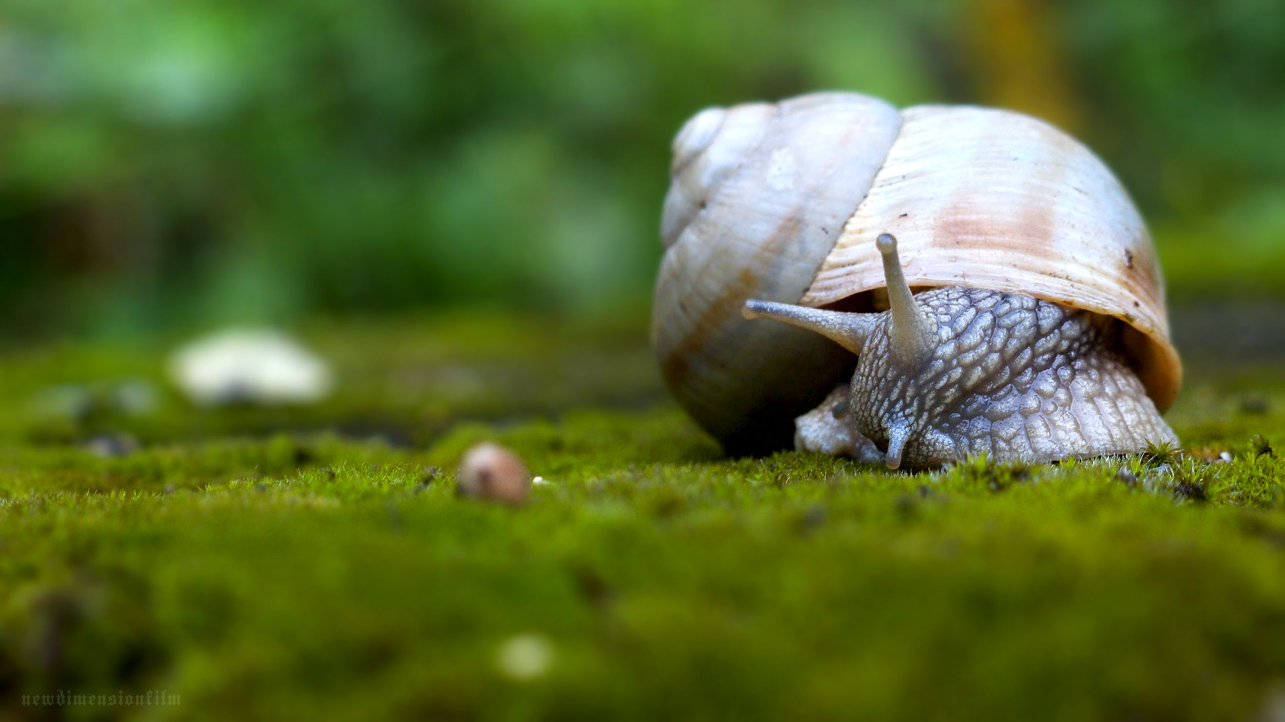 Snail Wallpapers 3