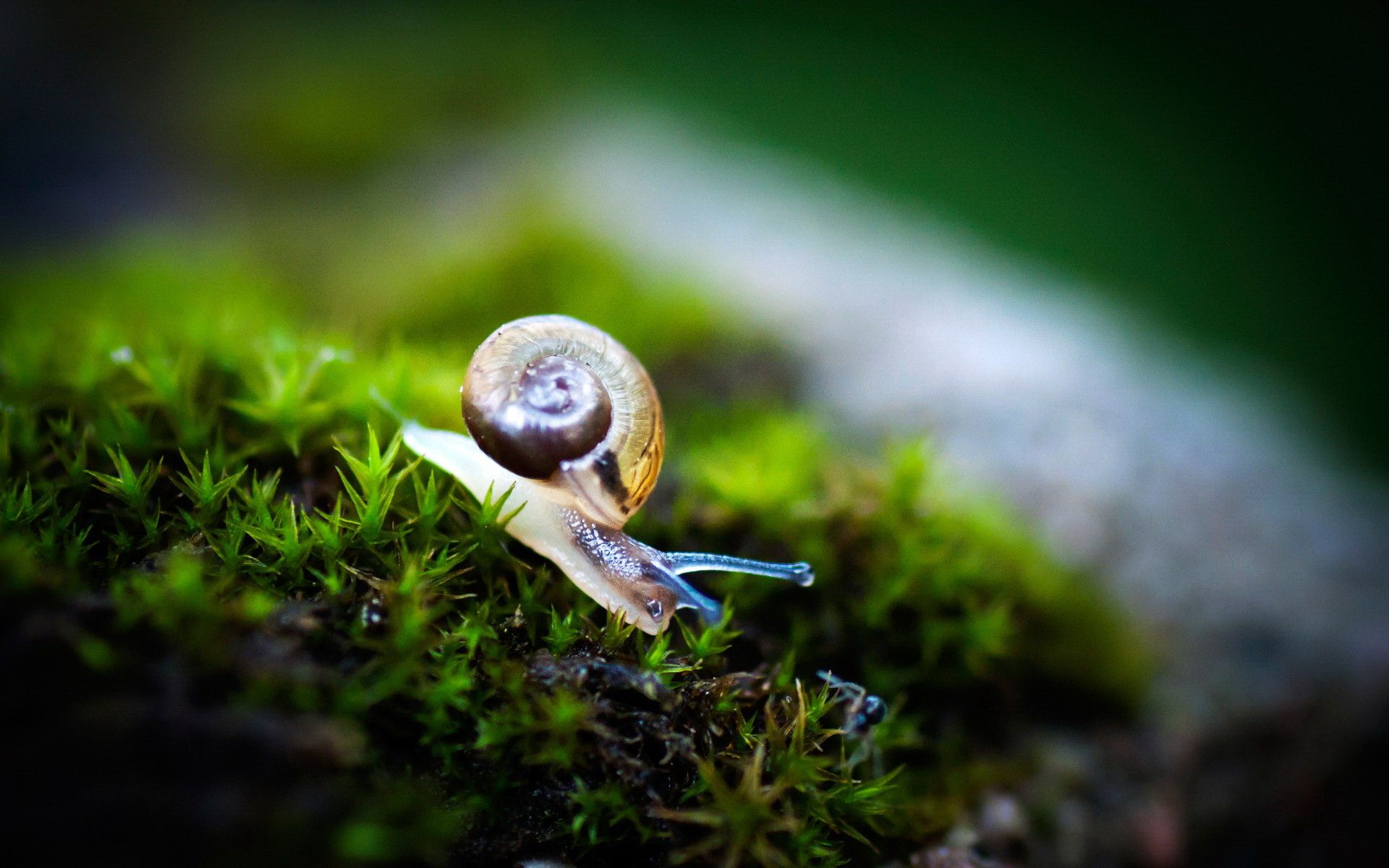 Snail Wallpapers, 47 Free Snail Wallpapers