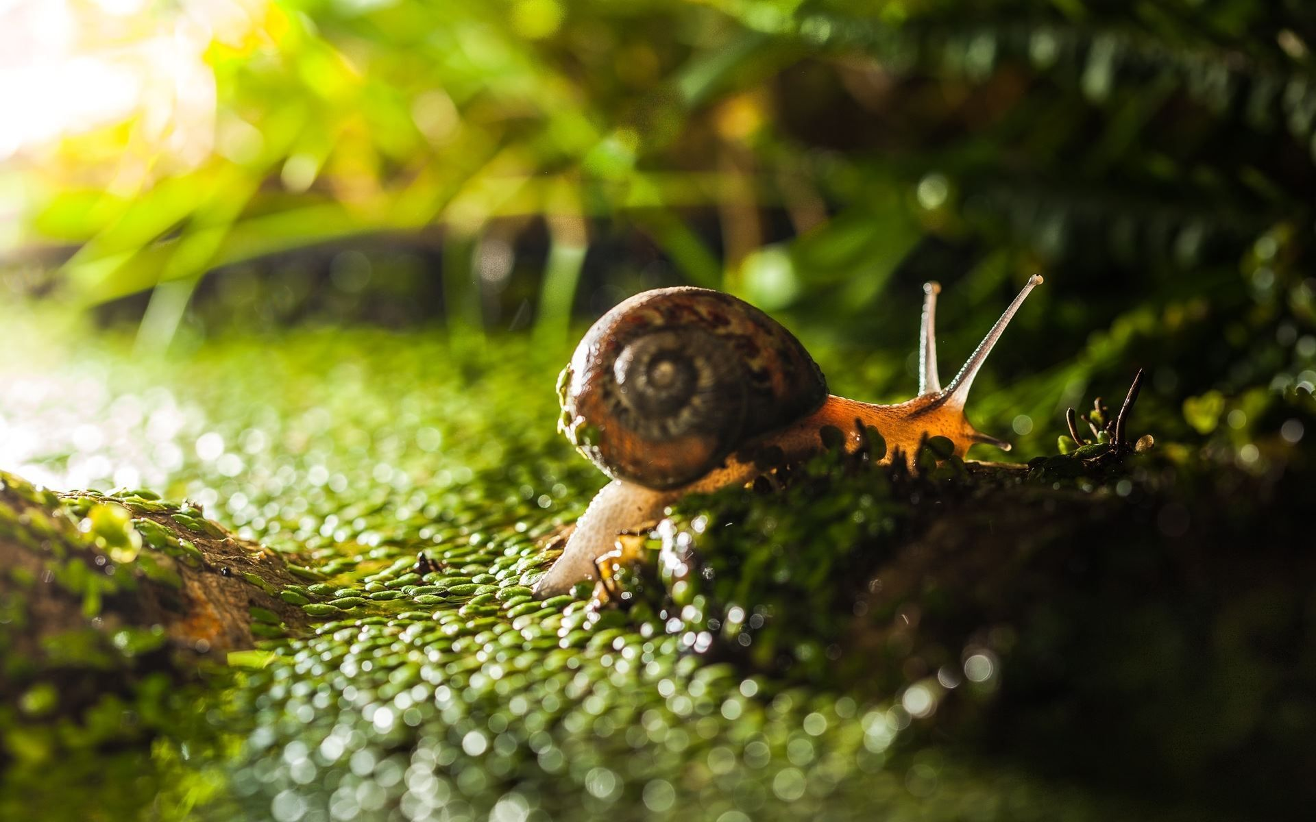 Snail HD Wallpapers and Backgrounds
