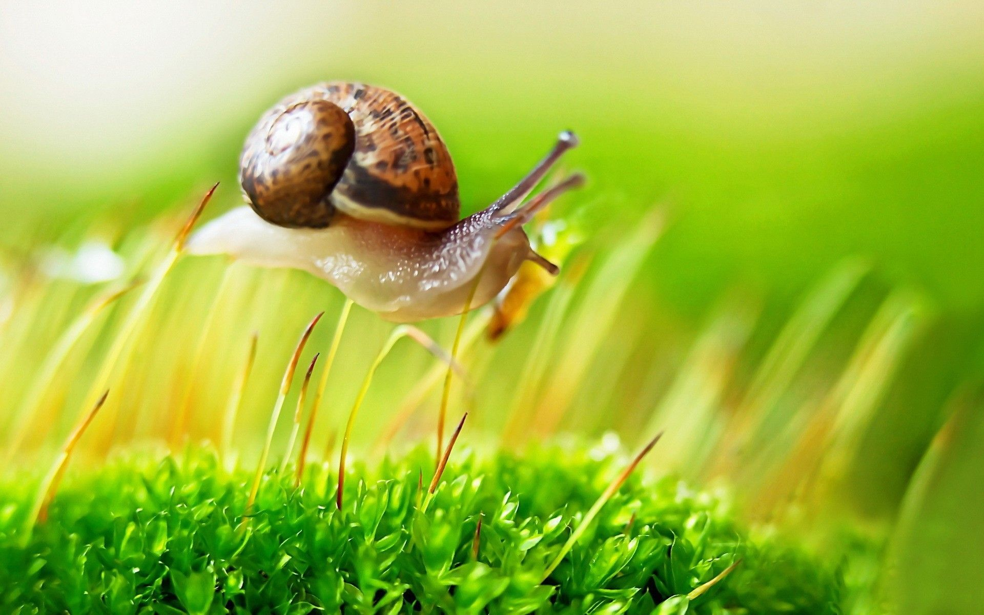 Snail on the grass wallpapers and image