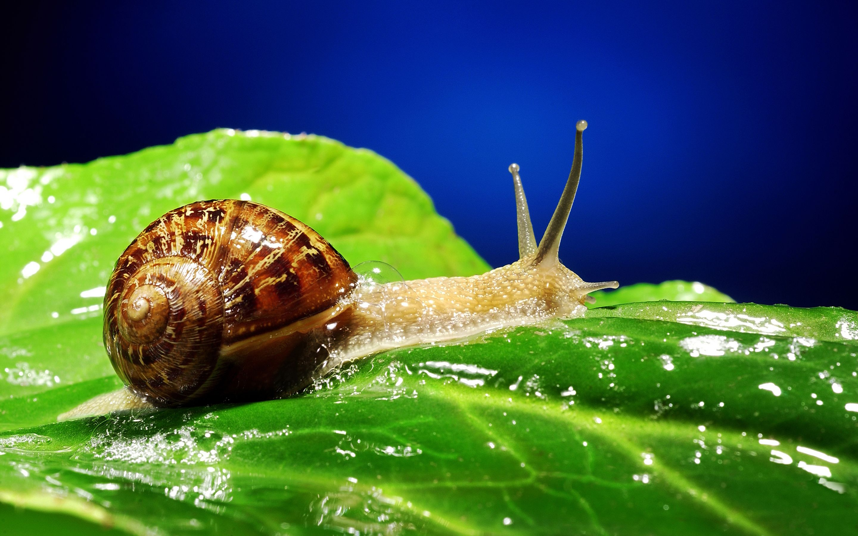 Snail Full HD Wallpapers and Backgrounds Image