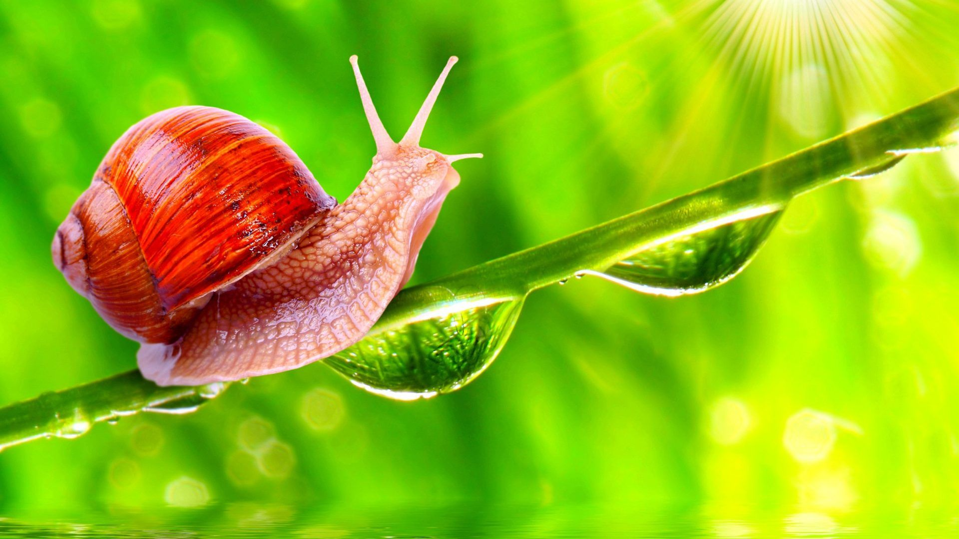 Snail Tag wallpapers: Snail Animals Seasons Birds Forests Creative