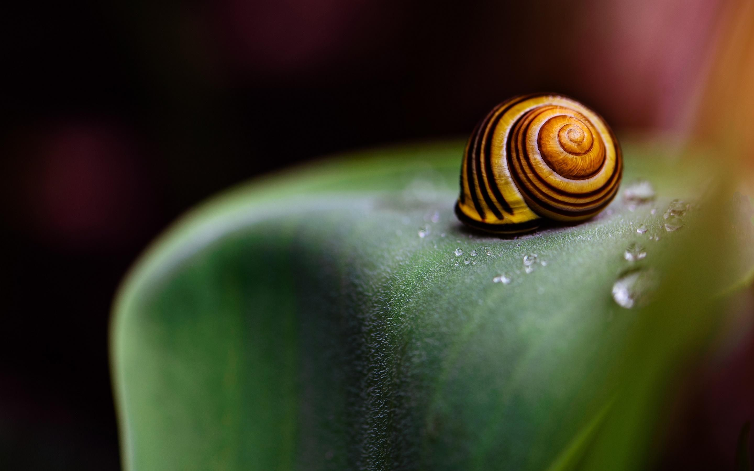 Snail Wallpapers, PC, Laptop 35 Snail Backgrounds in FHD