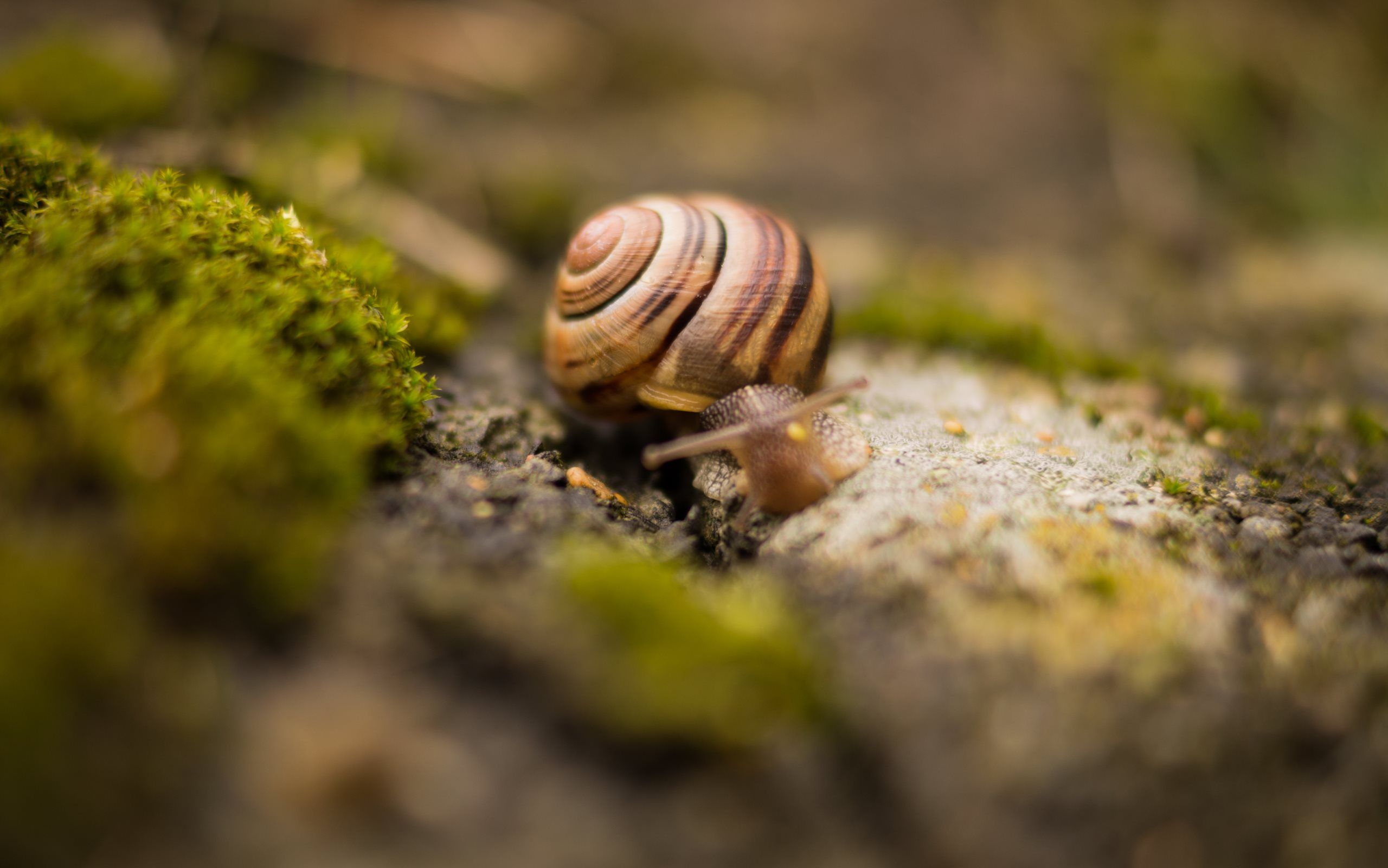 4K Snails Wallpapers High Quality