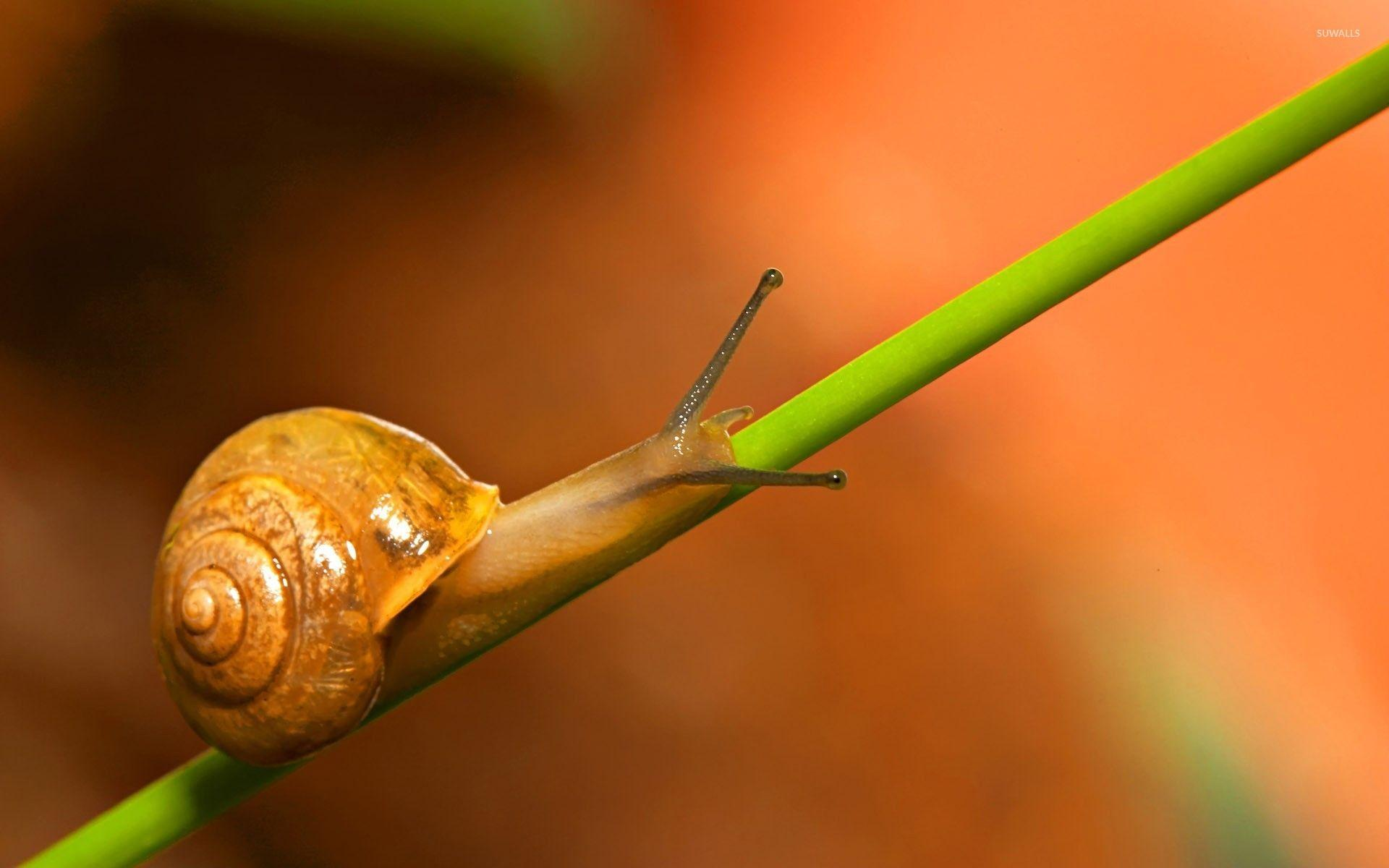 Snail [2] wallpapers