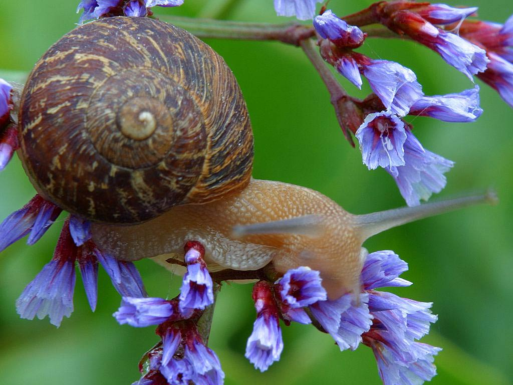 Free Snail Wallpapers