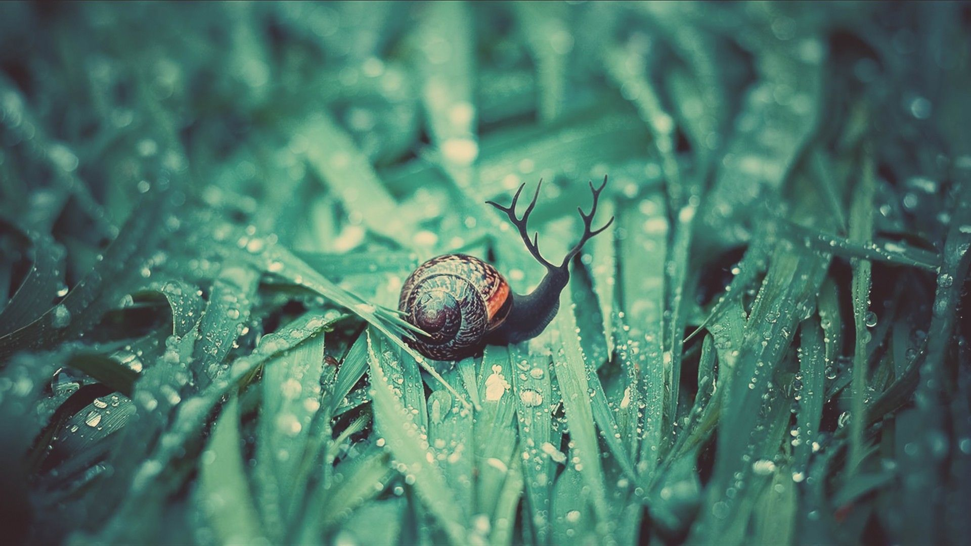 Grape snail wallpapers and image wallpapers pictures photos