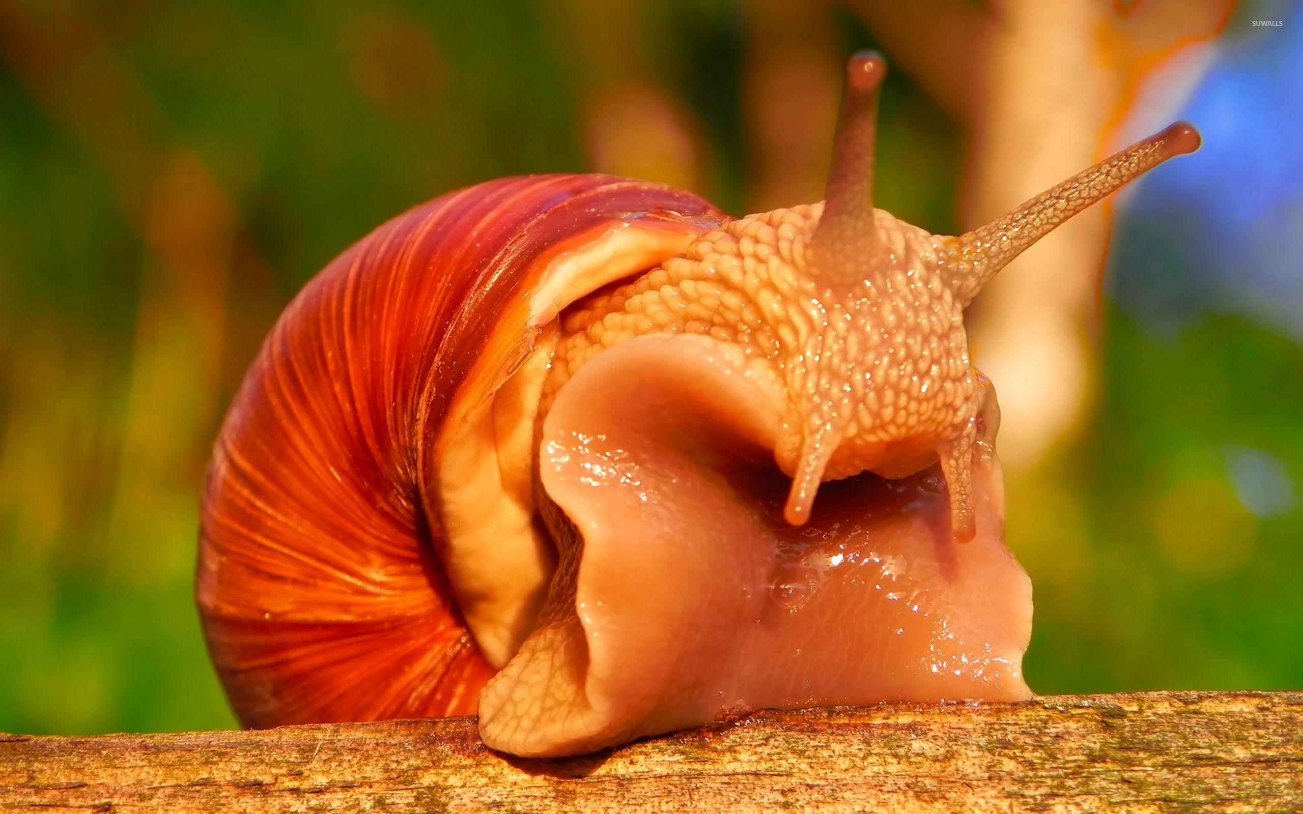 Snail [8] wallpapers