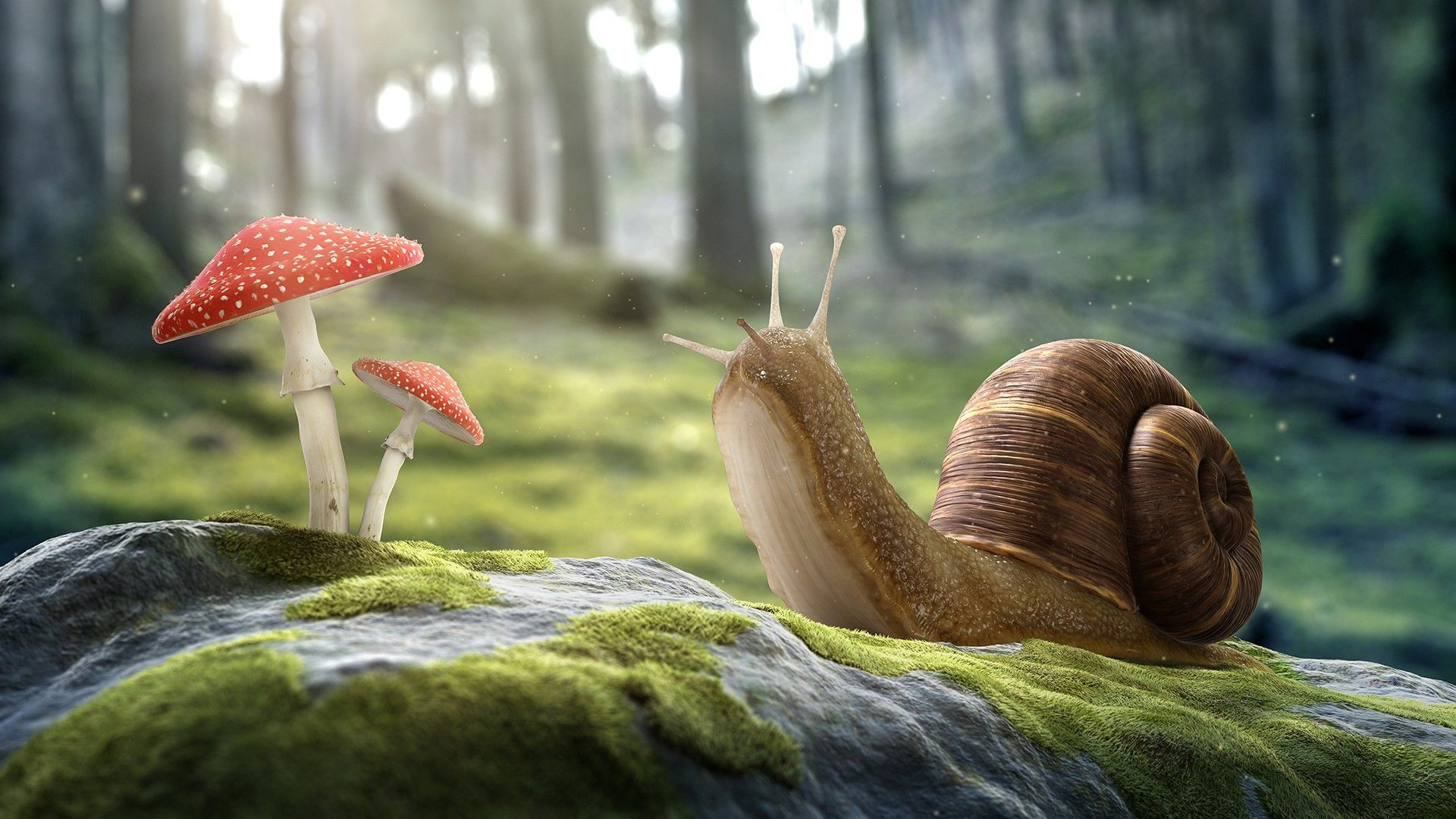 Snail on a stone and fly agaric wallpapers and image