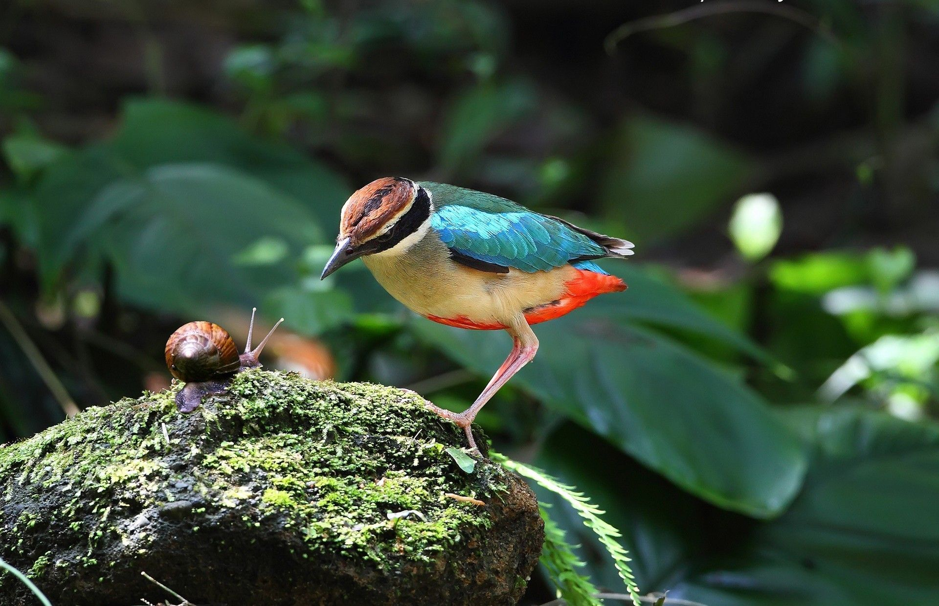 Birds: Snail Animals Birds Nature Bird Snails Wallpapers With And