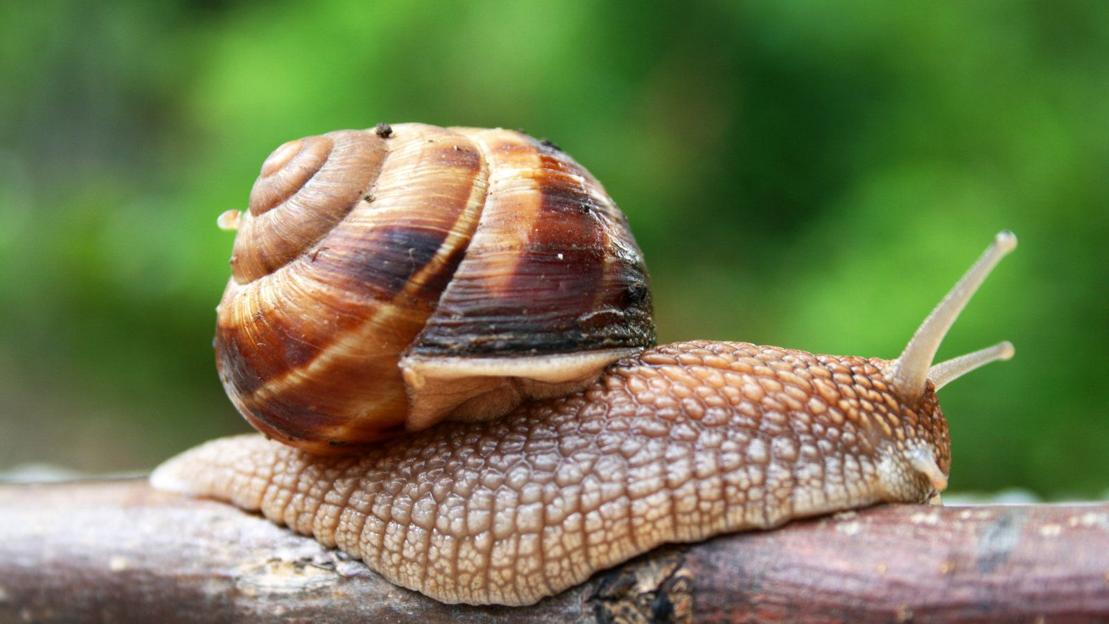 Snail wallpapers, CGI, HQ Snail pictures