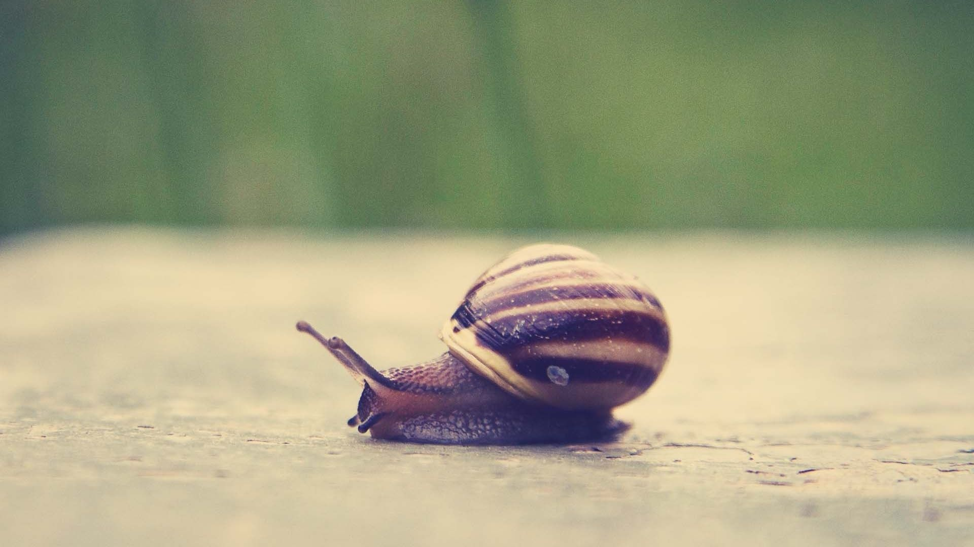 Snails And Mollusks Wallpapers, Desktop 4K High Quality Image, W