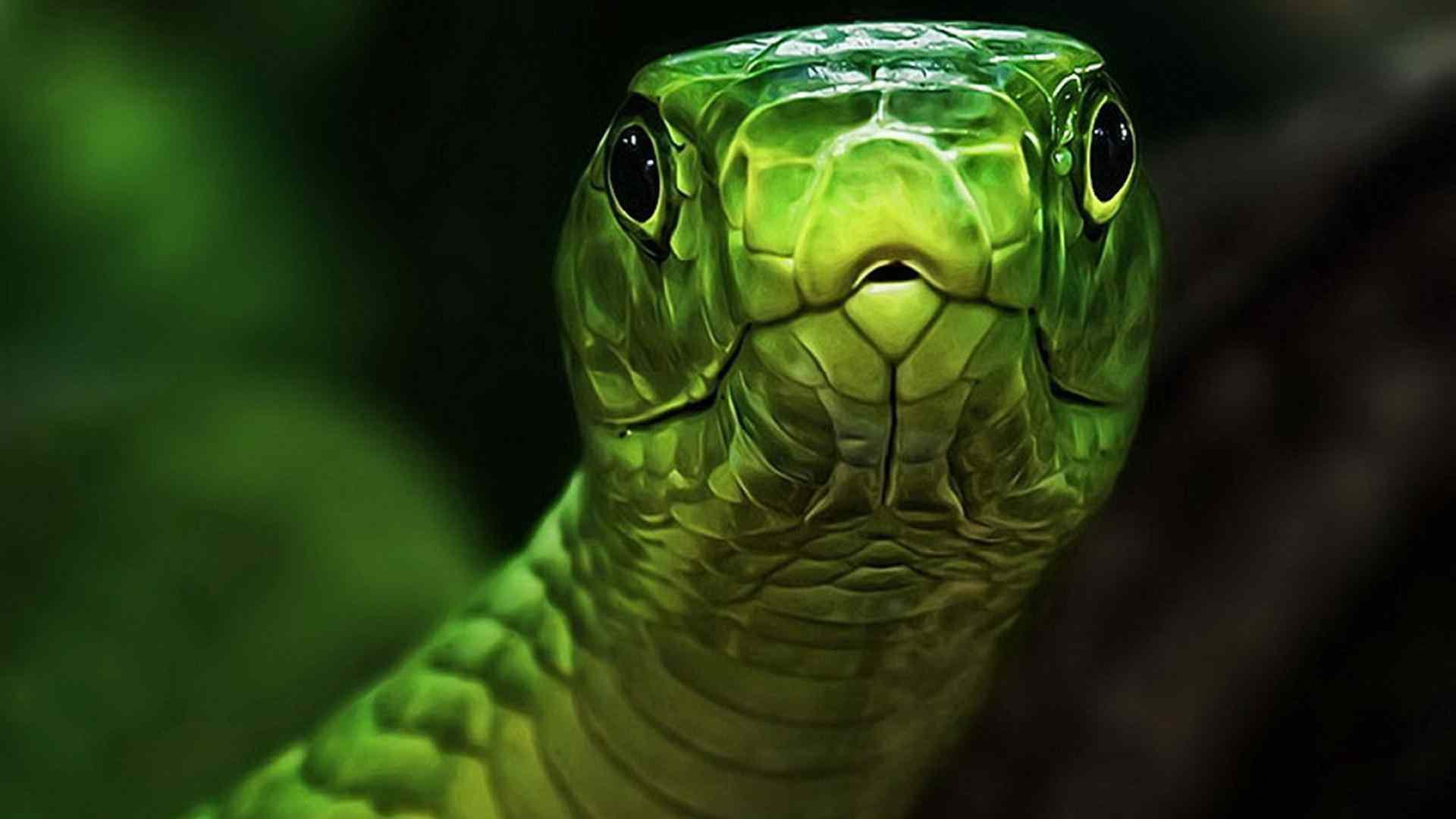 Image of an anaconda snake download