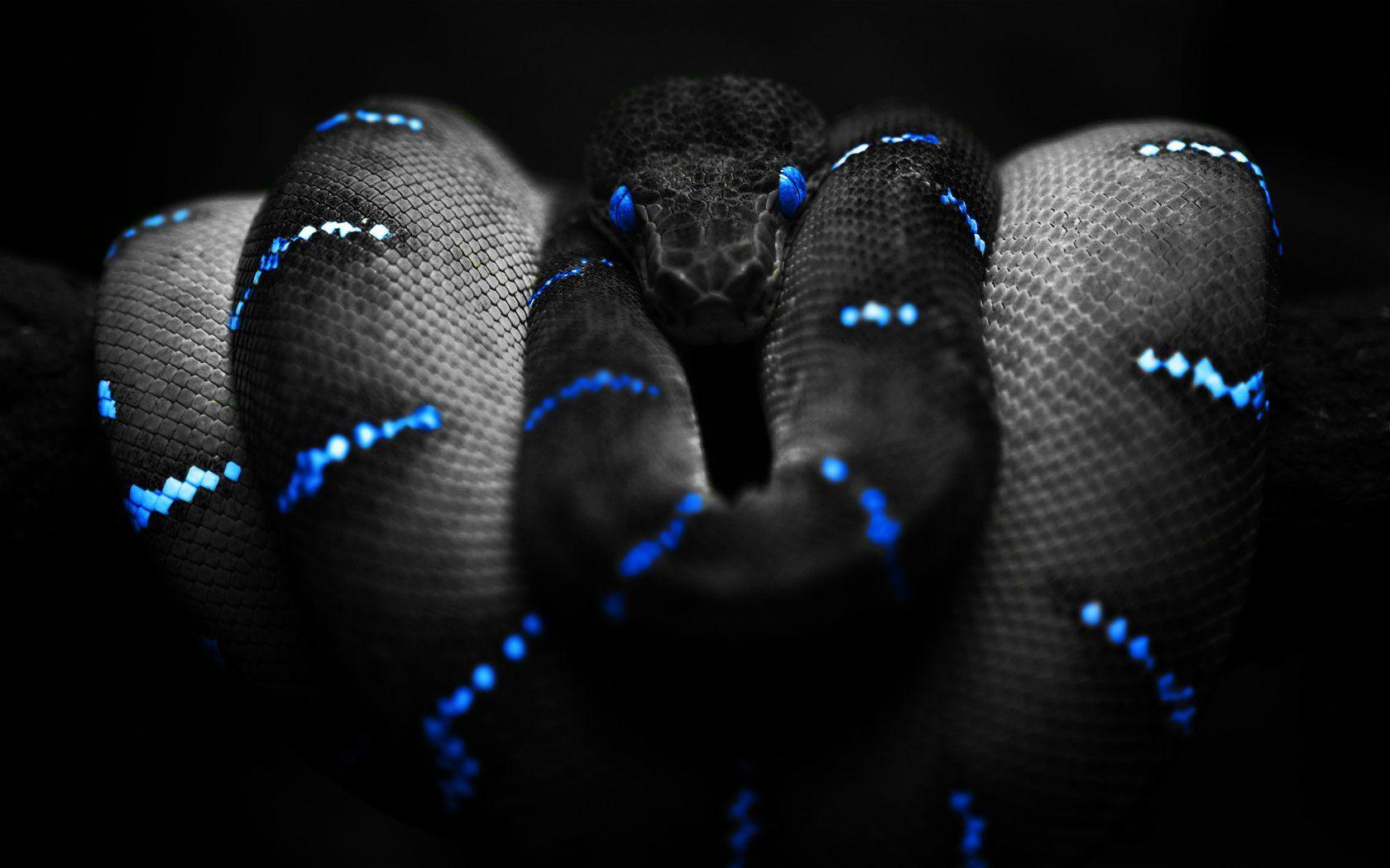 306 Snake HD Wallpapers