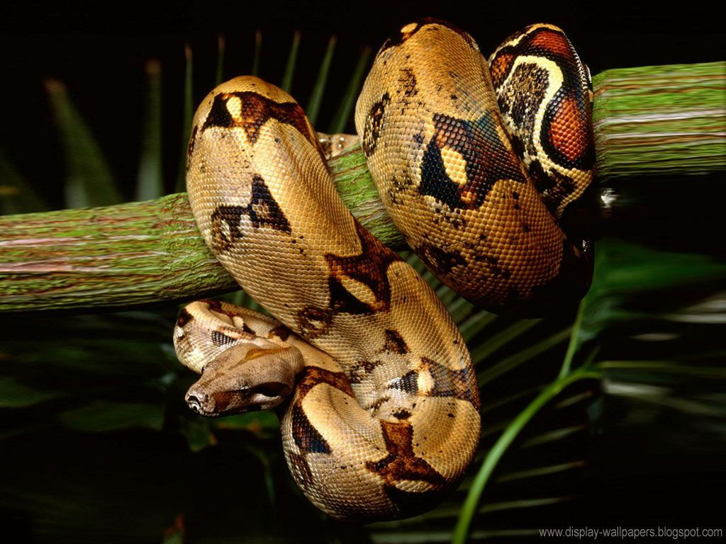 Best ideas about Snake Wallpapers Nature ×