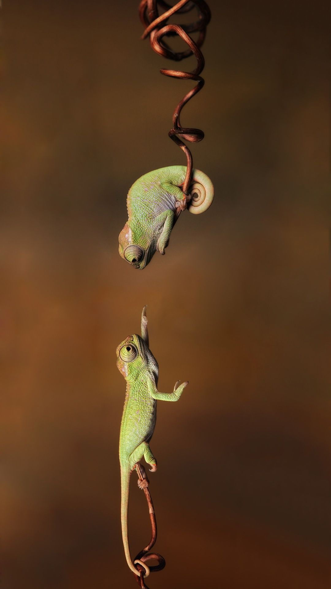 Cute Chameleon iPhone Wallpapers