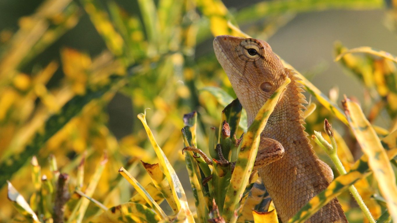 40 Chameleon HD Wallpapers FREE HD Download