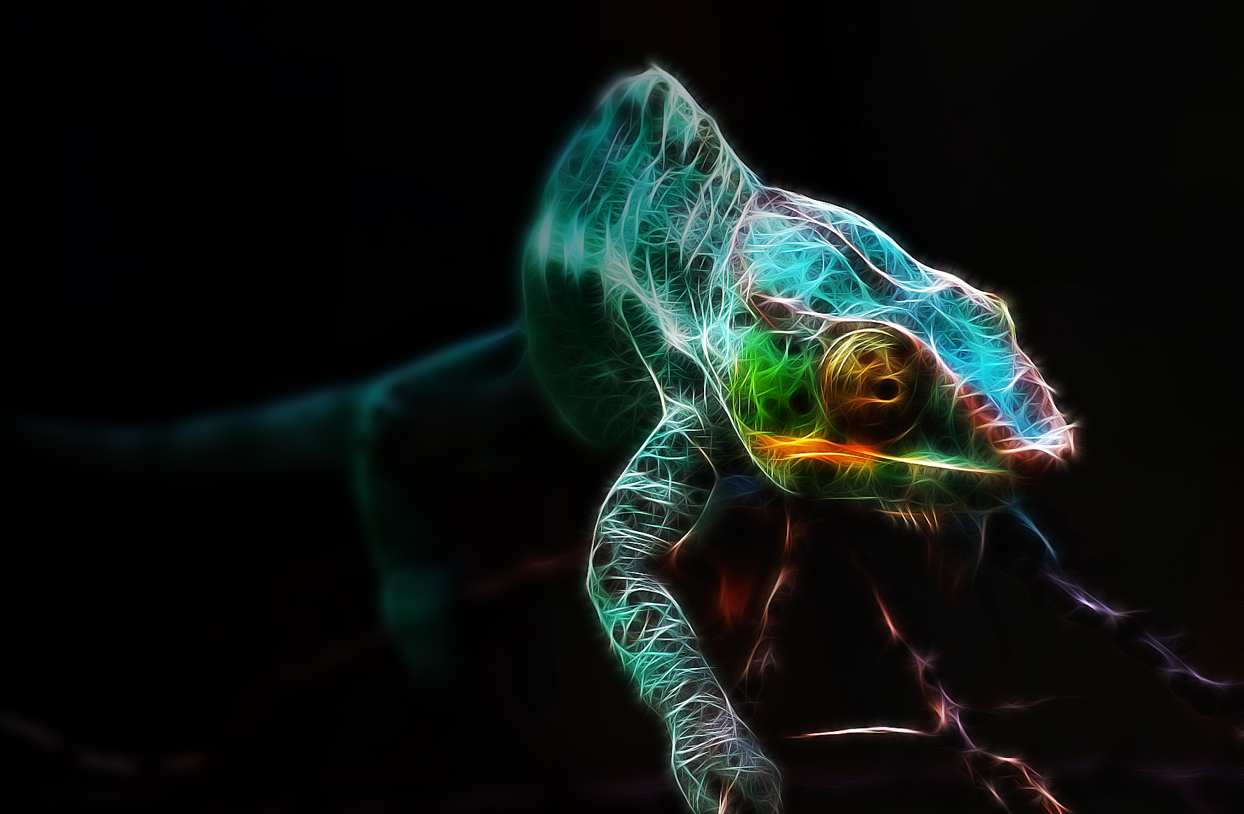 Chameleon Wallpapers and Backgrounds Image