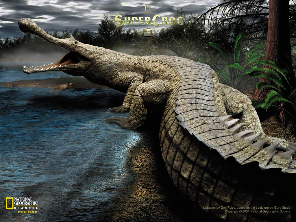 Crocodile Wallpapers and backgrounds