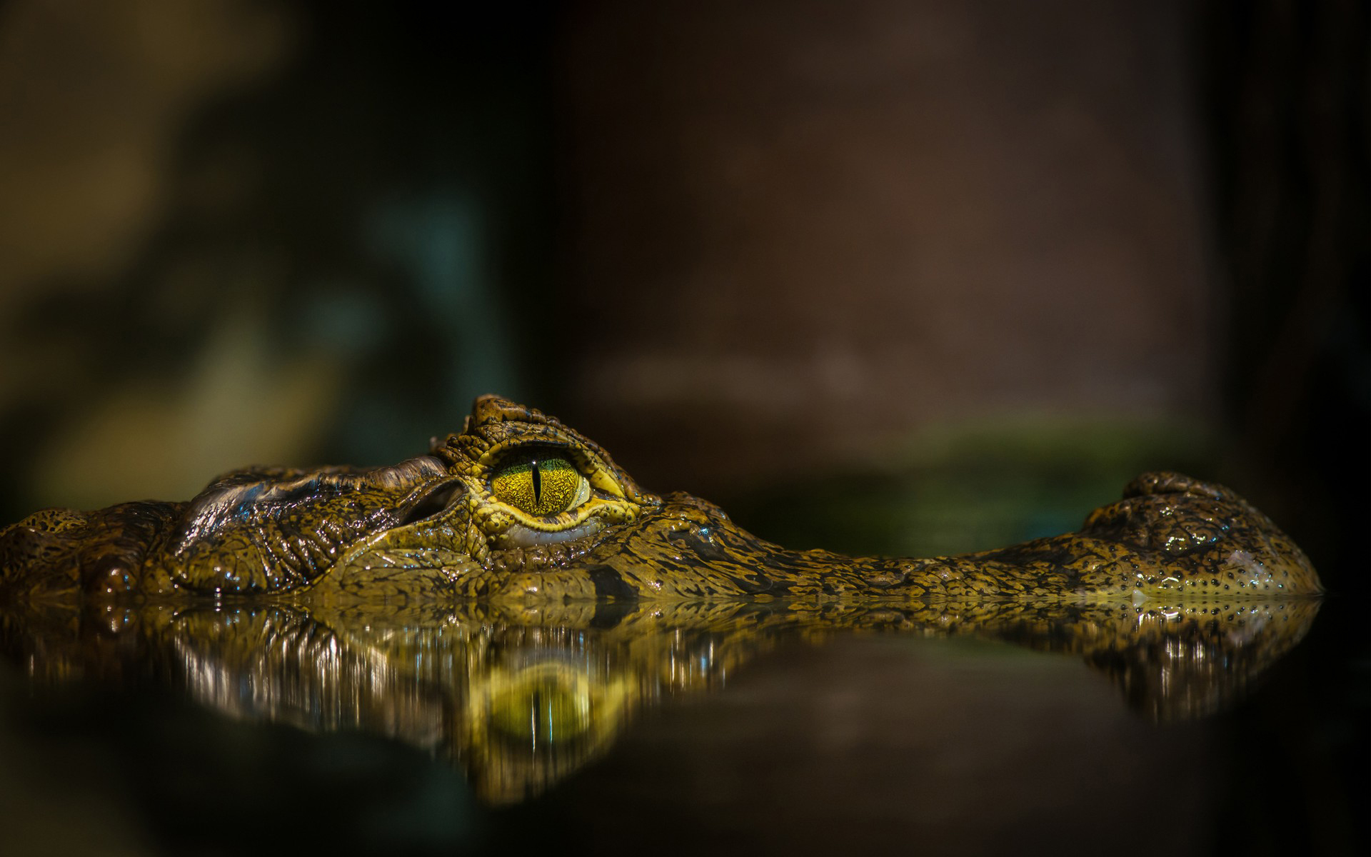 Crocodile HD Wallpapers