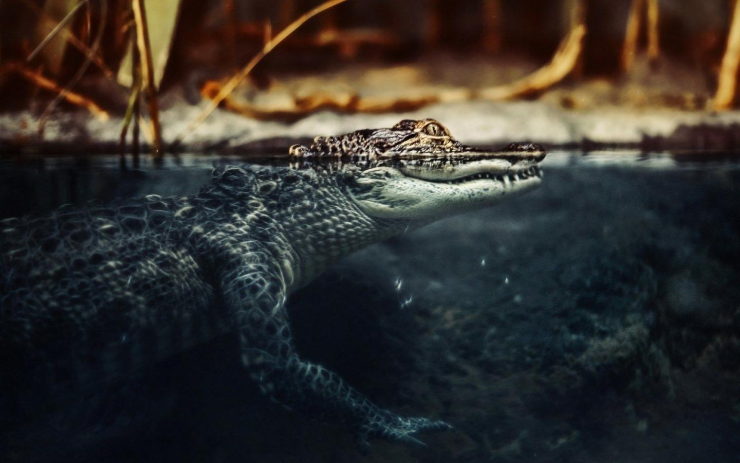 Crocodile Wallpapers 18