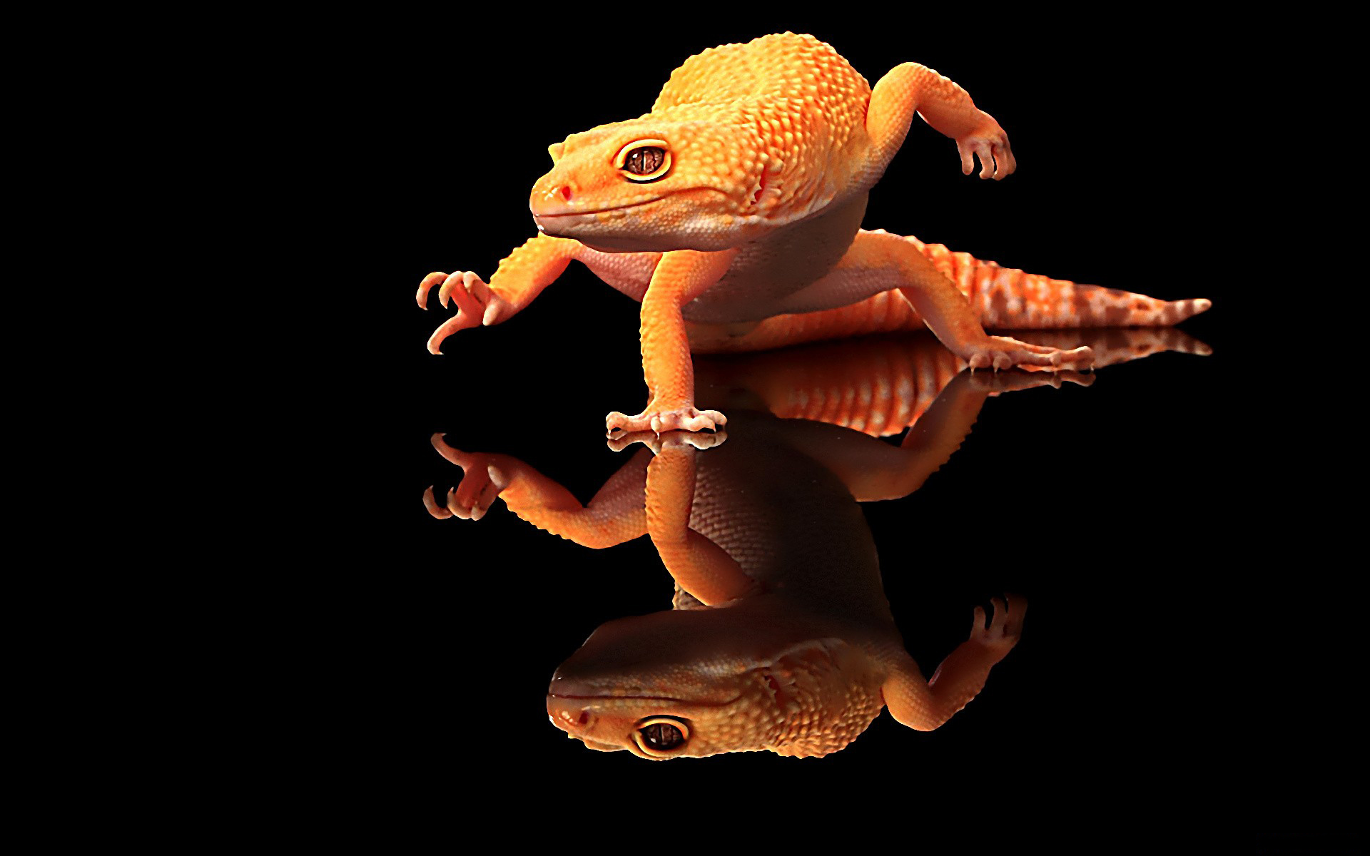 Gecko HD Wallpapers
