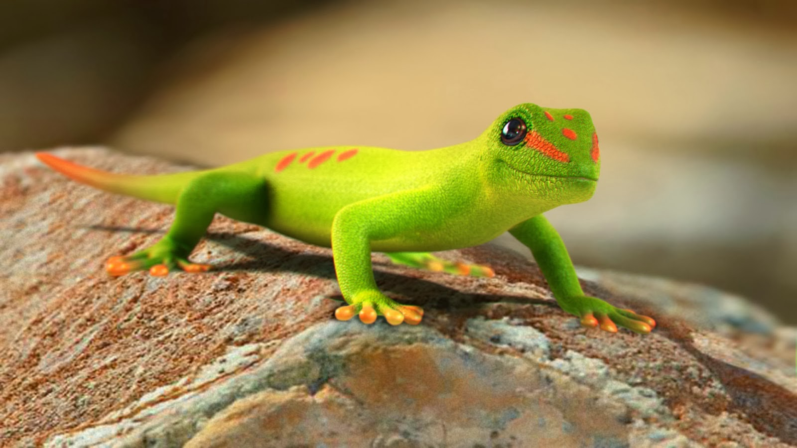 Gecko Wallpapers Desktop 1600x900