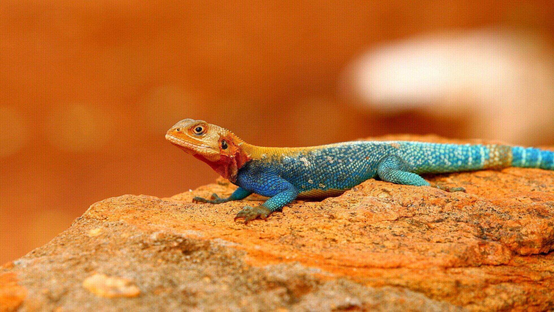 10 Agama HD Wallpapers