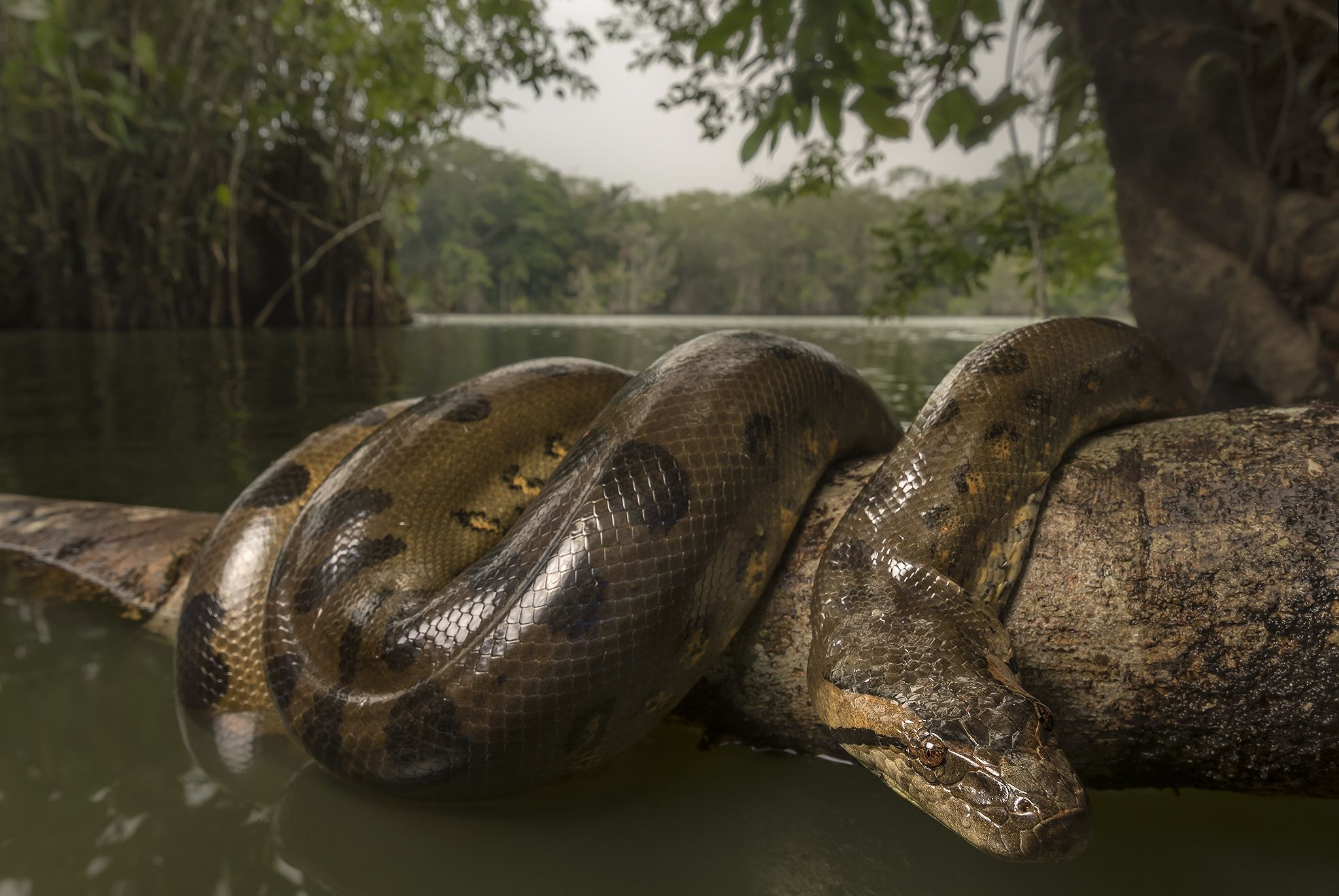 3 Anaconda HD Wallpapers