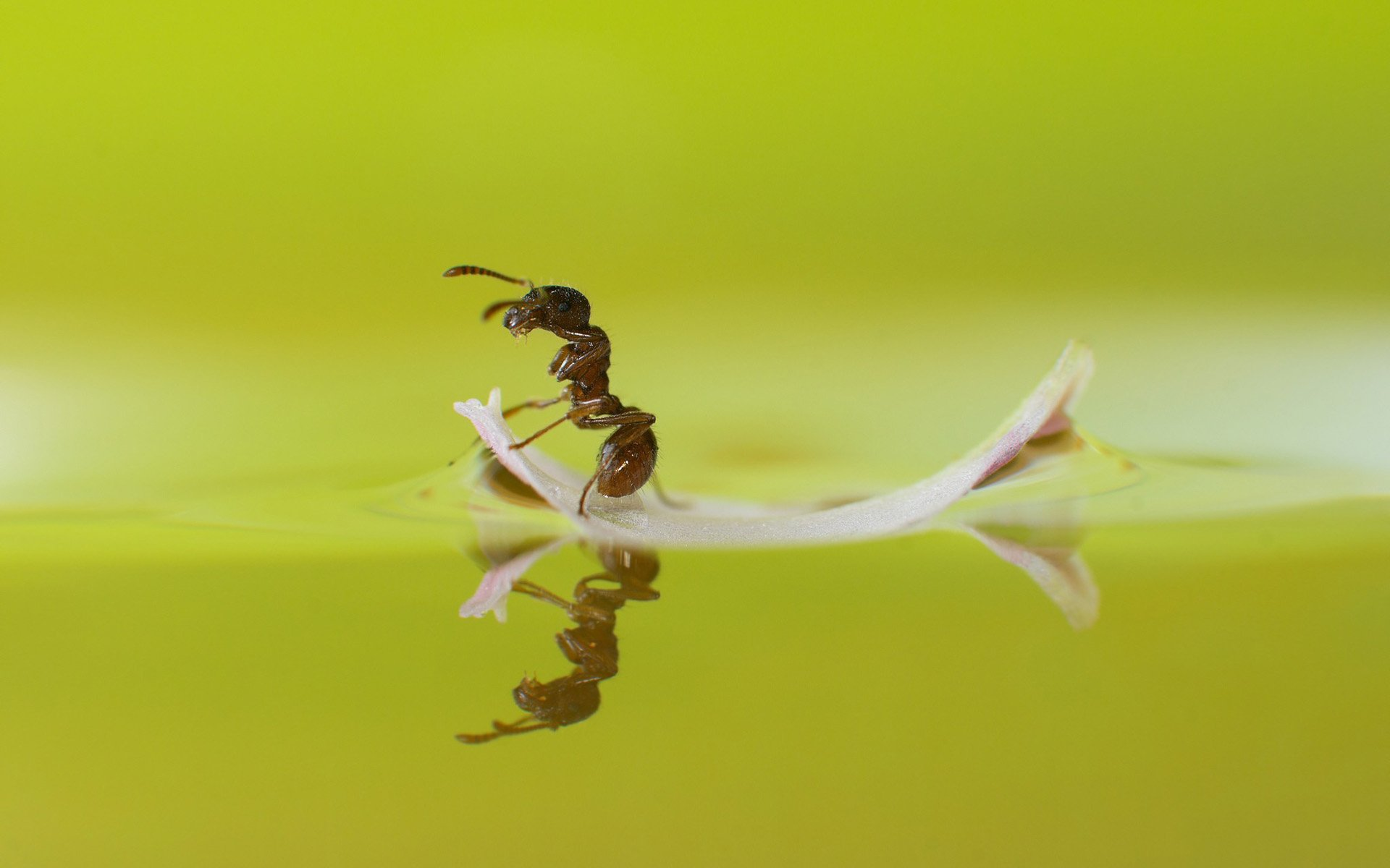 110 Ant HD Wallpapers