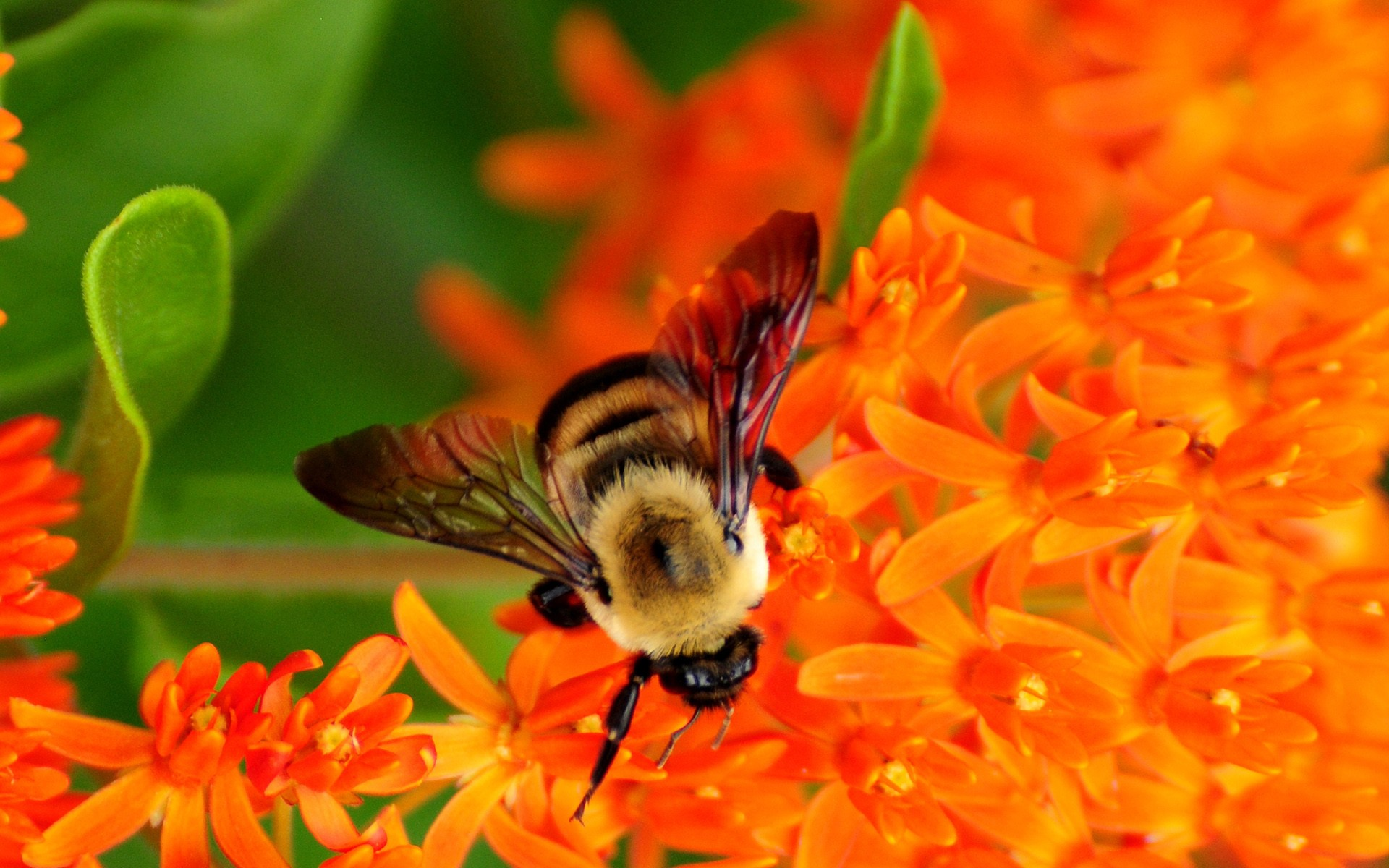Image of bumble bees