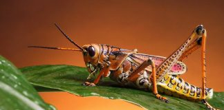 Bush Crickets Wallpapers.jpg