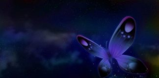 Butterflies Wallpapers.jpg