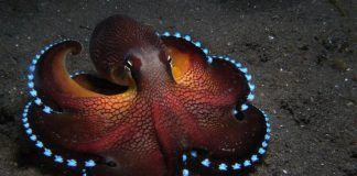 Cephalopod Wallpapers.jpg