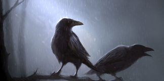 Crows Wallpapers.jpg