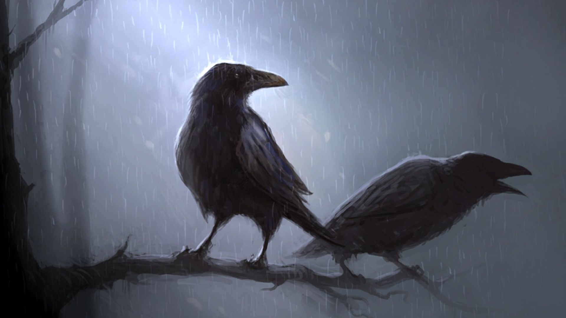 63 Crow HD Wallpapers