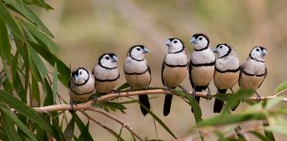 Finches Wallpapers.jpg