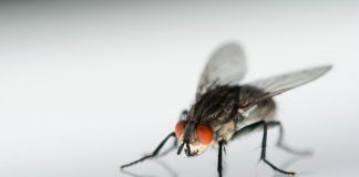 Fly Insect Wallpapers.jpg
