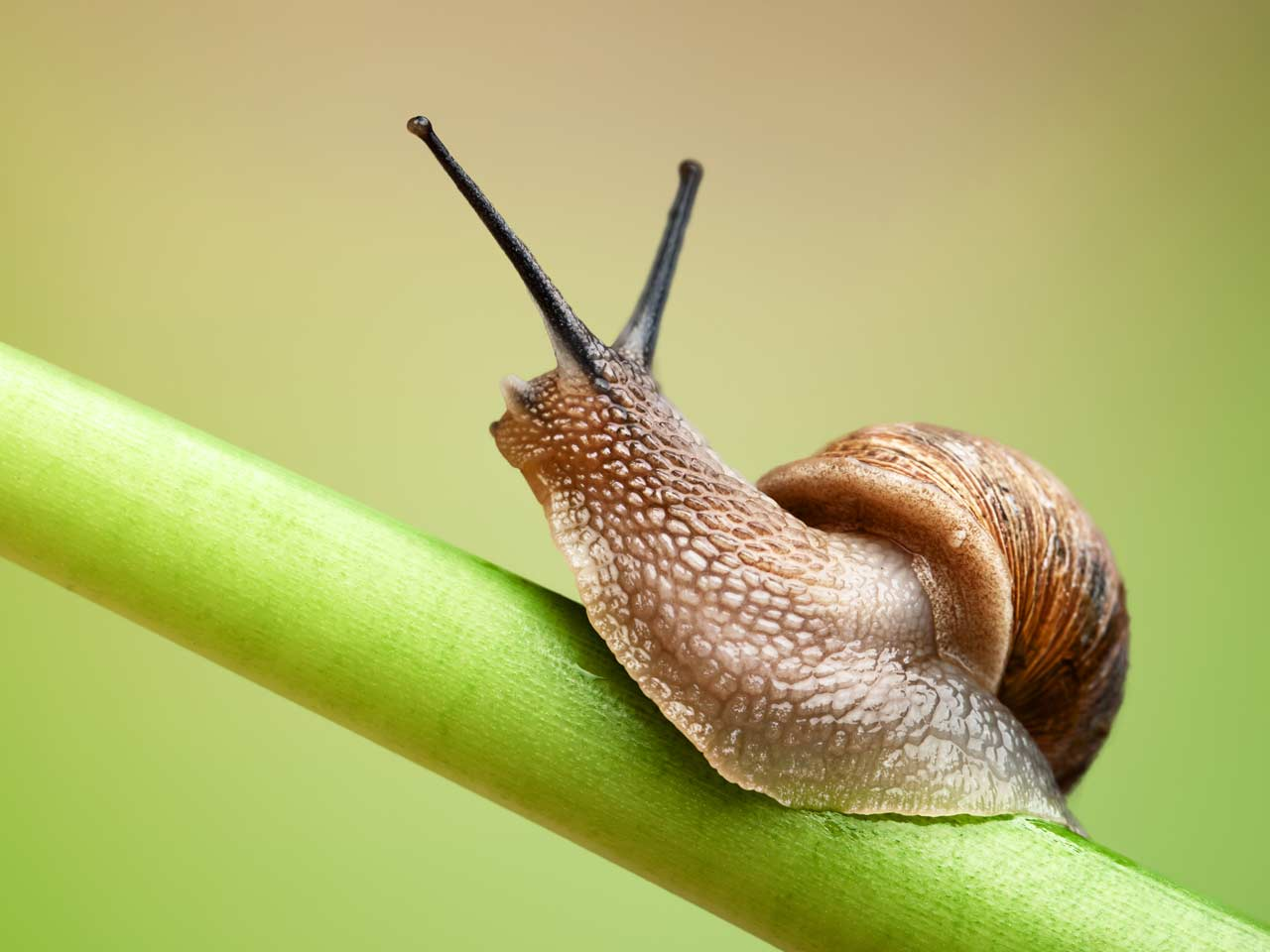 Snails wallpapers, Humor, HQ Snails pictures