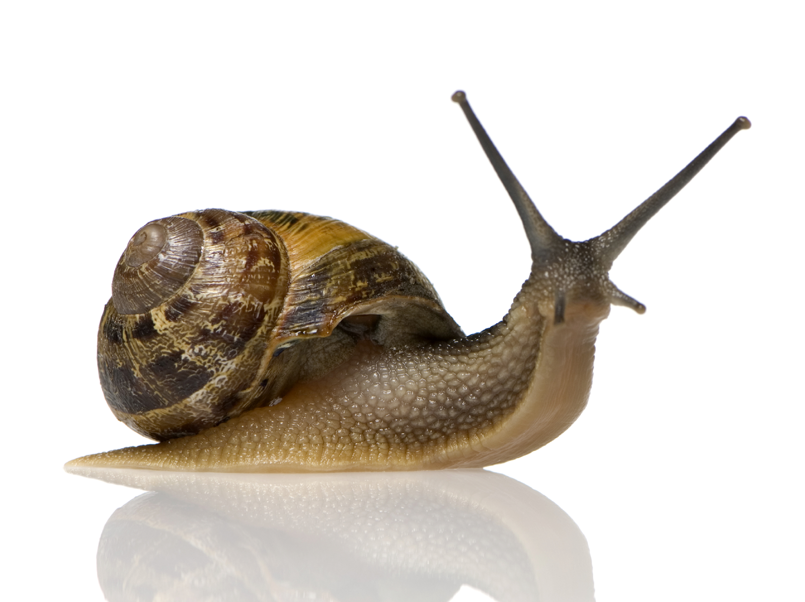 Best 38+ Snail Backgrounds on HipWallpapers