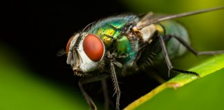 Housefly Wallpapers.jpg