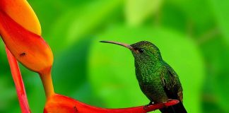 Hummingbird Wallpapers.jpg