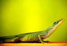 Lizard Wallpapers Wallpaper Cave.jpg