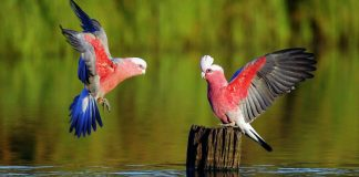 Parrot Wallpapers.jpg